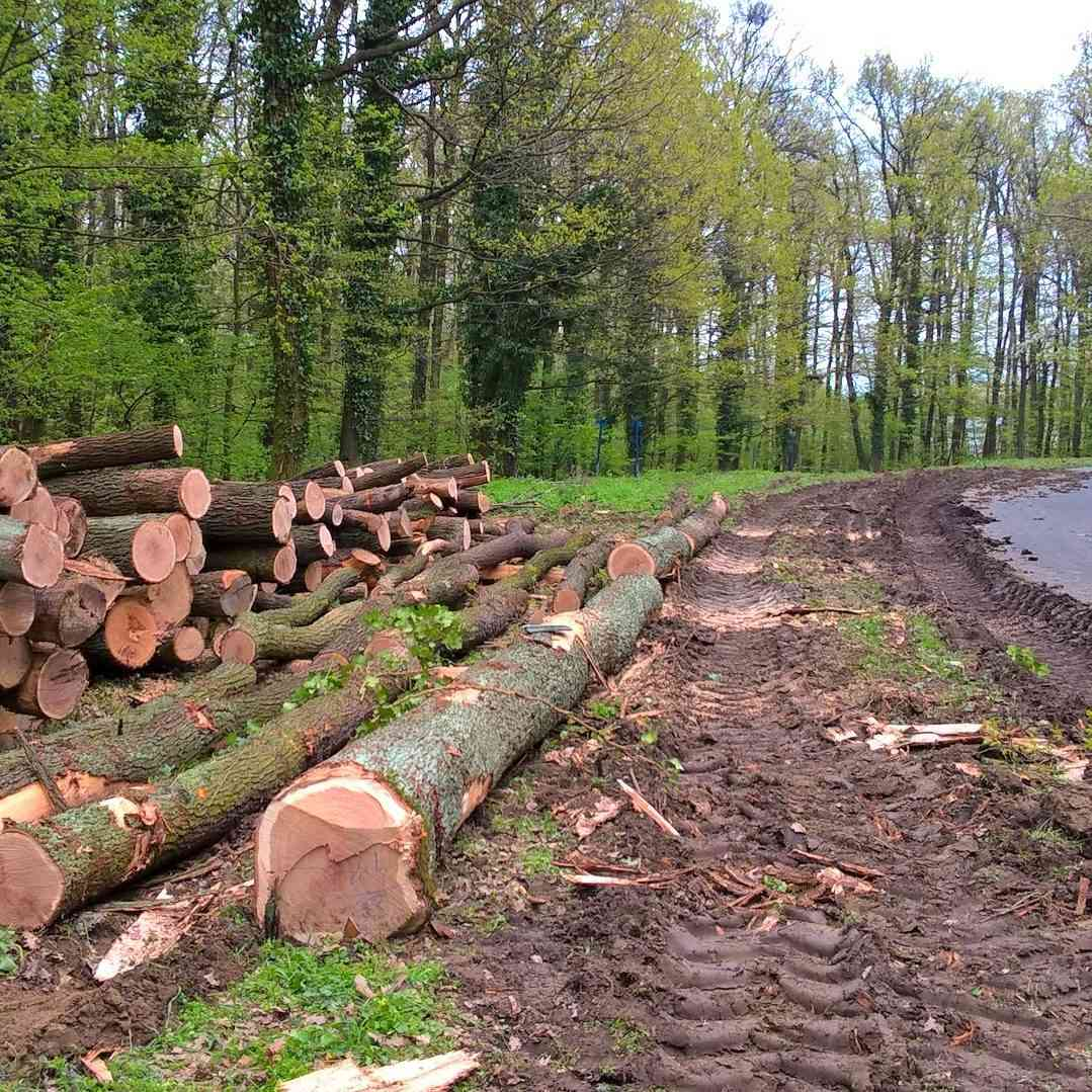 Starostovia žiadajú zastavenie výrubu vlesoch vokolí Bratislavy