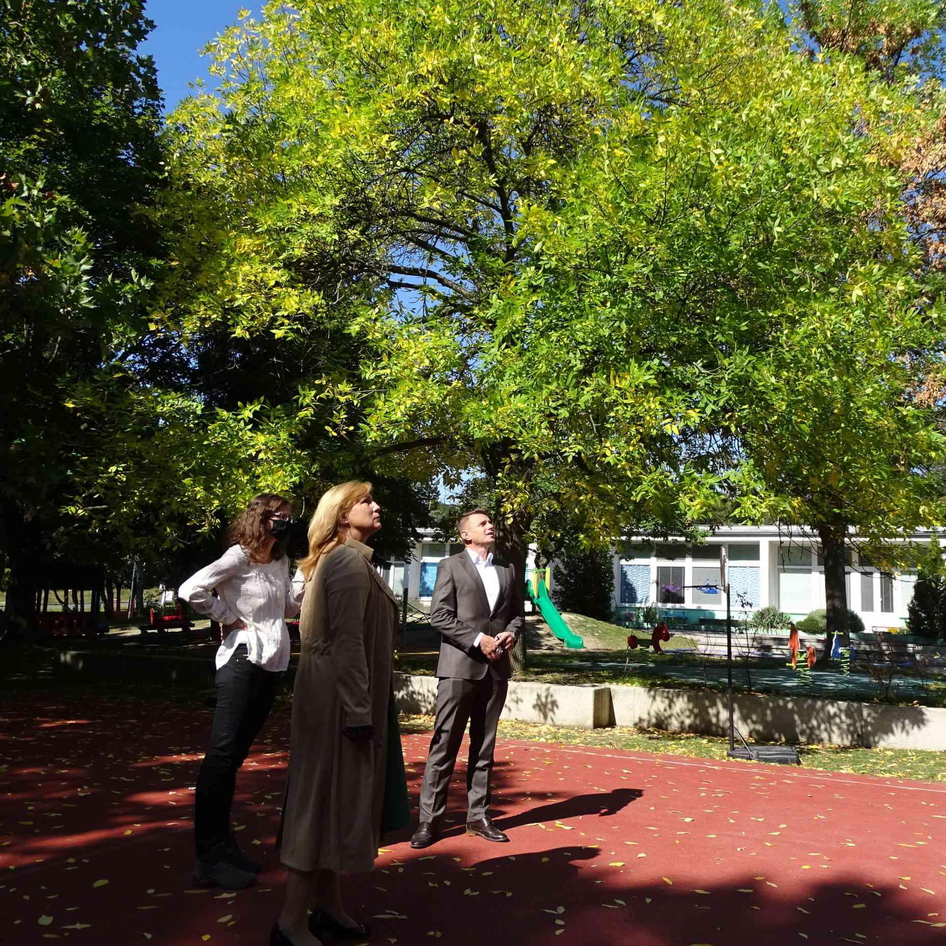 V areáloch škôl aškôlok musia byť zdravé stromy