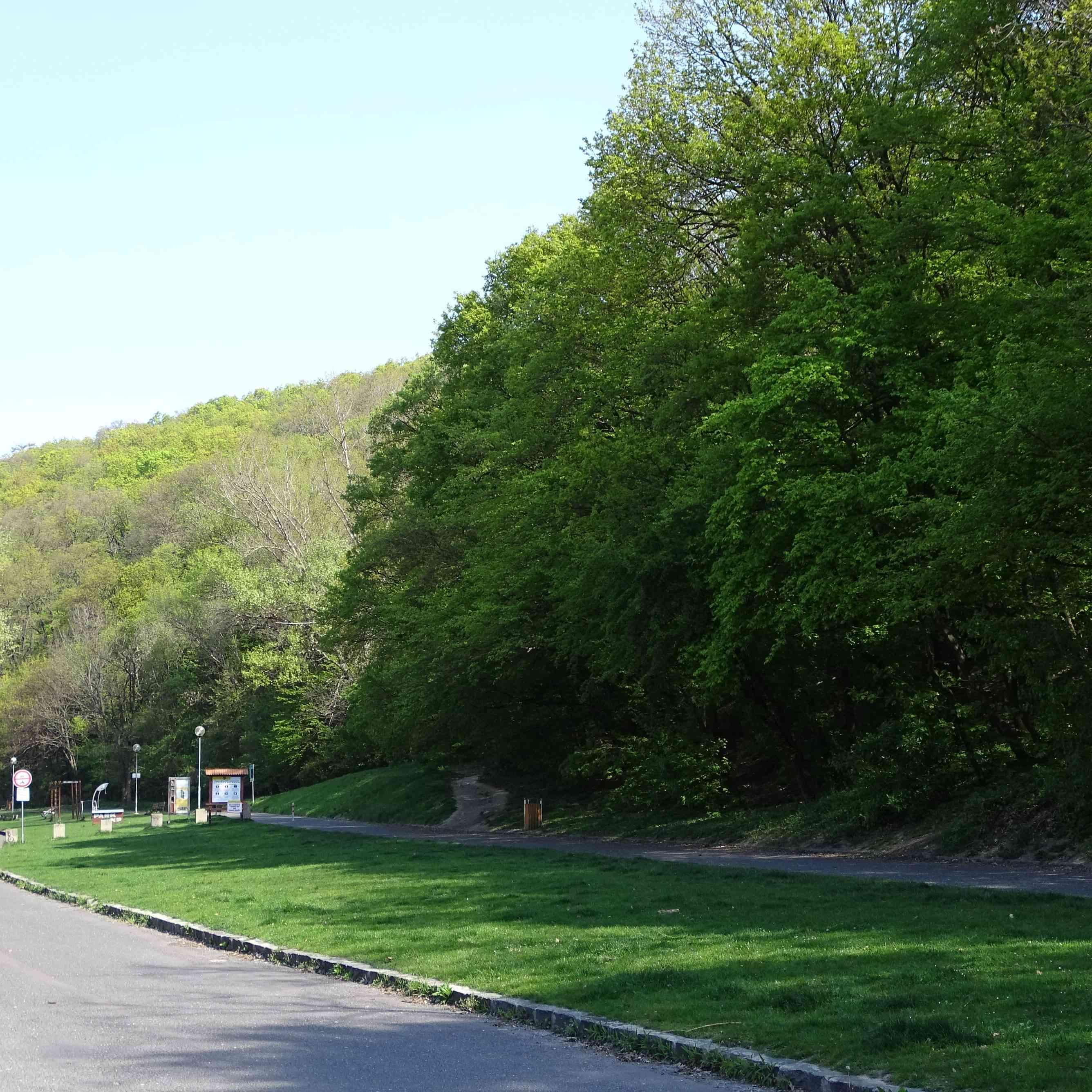 Suché stromy na Sitine konečne odstránia