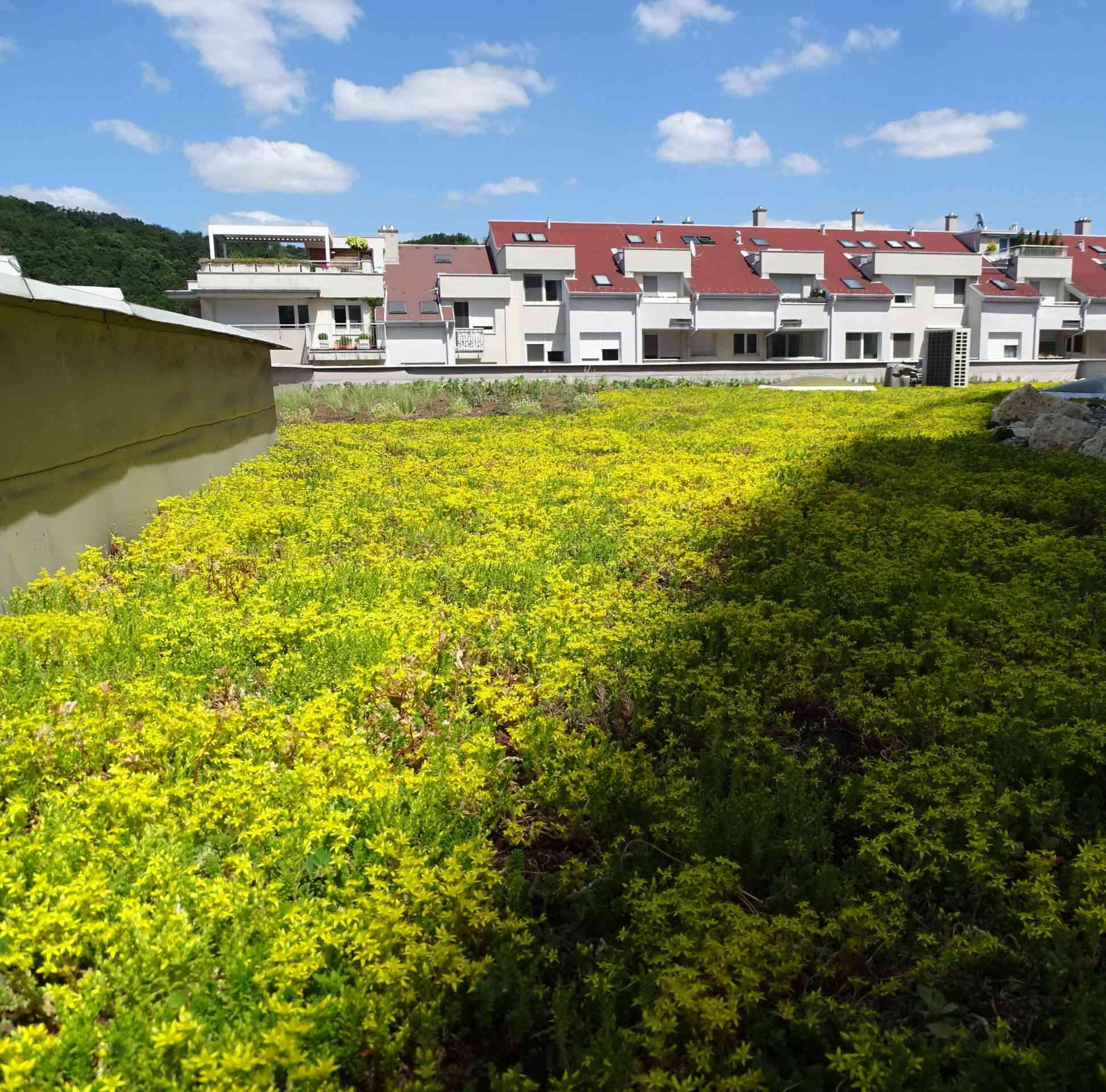 Návštevníkov úradu v Karlovej Vsi poteší priekopnícka zelená strecha