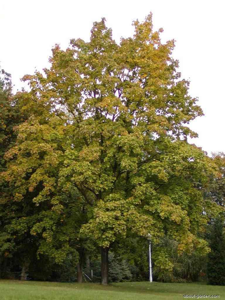 Karlova Ves zmapovala zeleň na svojom území