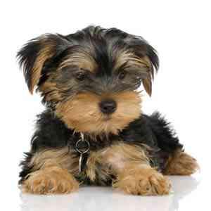 Sú vo vašom dome evidovaní všetci psi?