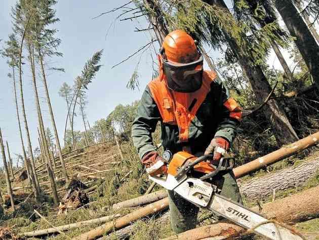 Ťažba dreva v oblasti Devínskej Kobyly